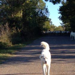 Toscana: il lupo nella  Maremma